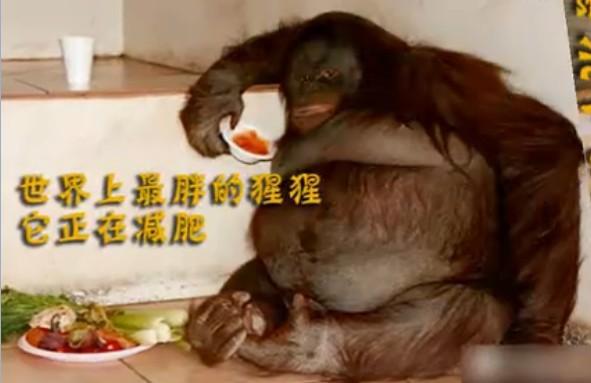【全球十大最胖动物】亮瞎我的眼