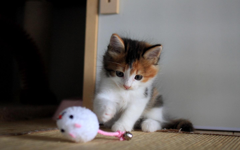 【娃儿】最萌的动物图片