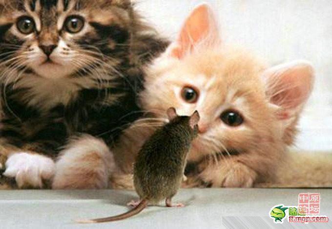 壁纸 动物 猫 猫咪 小猫 桌面 680_468