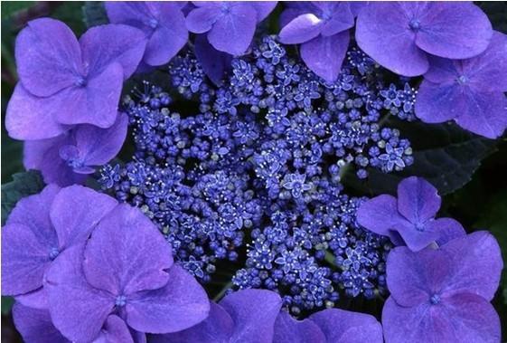 【十二星座】代表花和幸运物