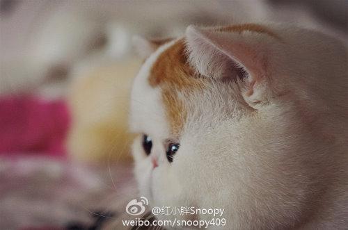 °转° 这里有萌死你的猫猫0v0 ║红小胖snoopy║