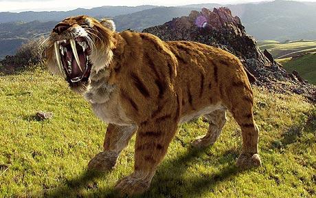 剑齿虎长着一对和其他猫科动物相比较长的犬齿,故得名,但远小于刃齿