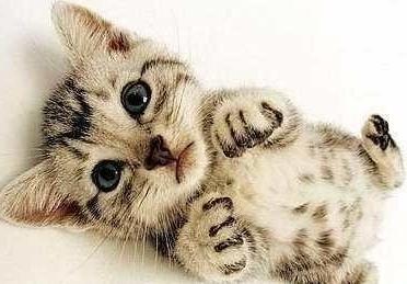 动物 猫 猫咪 小猫