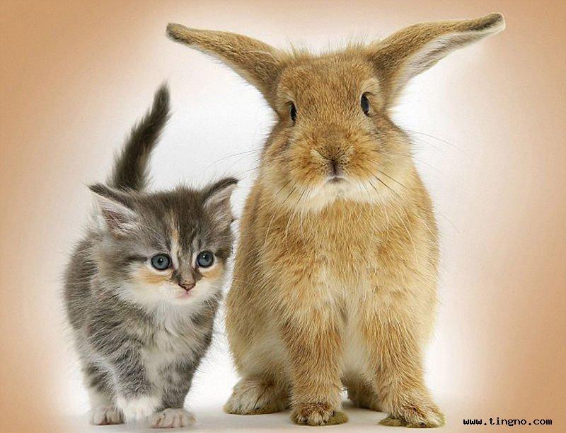 暖暖一家亲;; 猫萌兔呆狗老实,真可爱