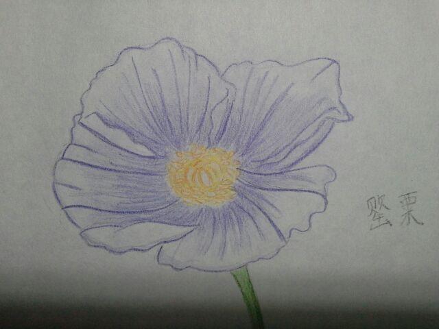 简单手绘花朵画
