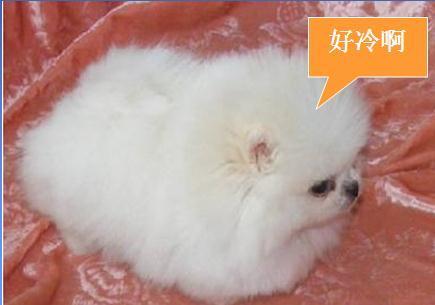 好冷的图片可爱兔子
