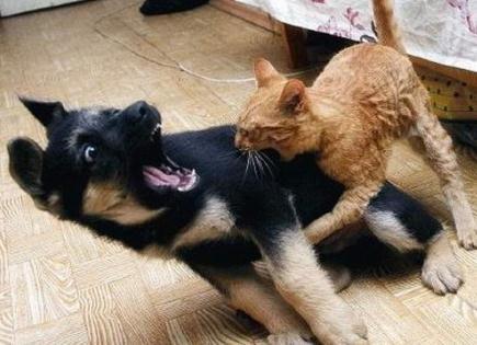 【转】搞笑动物萌图,笑了别忘赞!