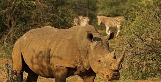 地球上现存最强的50种动物
