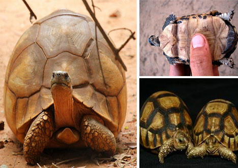 世上濒临灭绝的动物