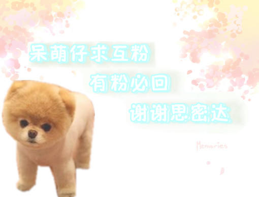 车见车载的可爱呆萌狗!