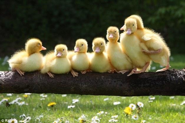 【紫珣】刚出生的小动物们