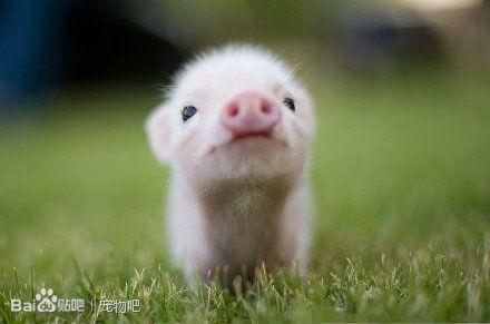【沫稀】各种刚出生的小动物的图片