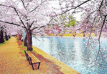 古风樱花风景图片