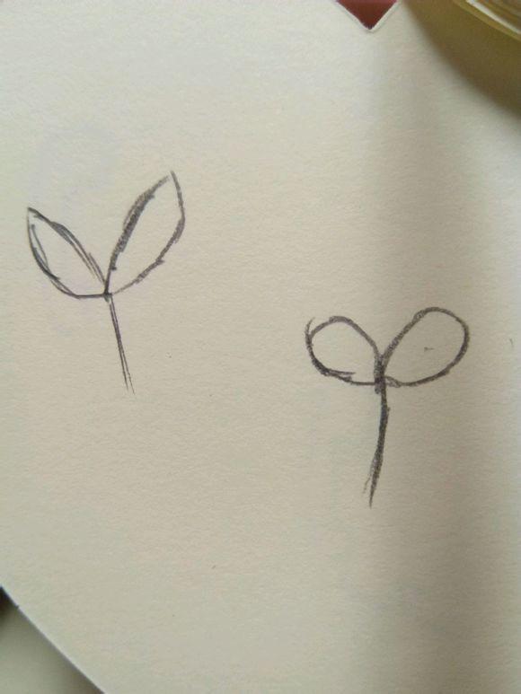 简单的花边简笔画