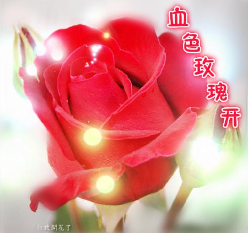 奥剧{复仇剧}:血色玫瑰开