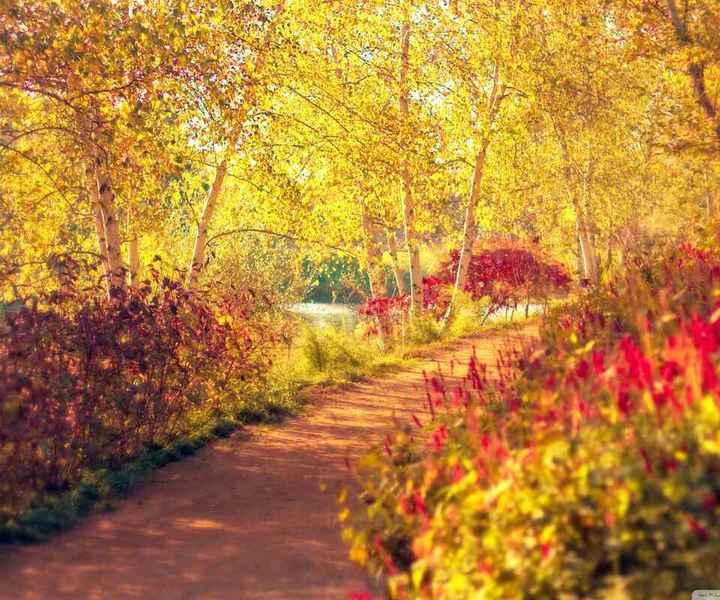 背景 壁纸 风景 绿色 绿叶 森林 树叶 植物 桌面 720_600