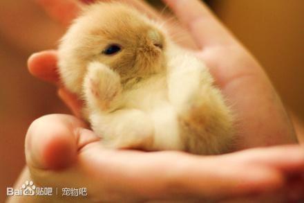 刚出生的小兔子