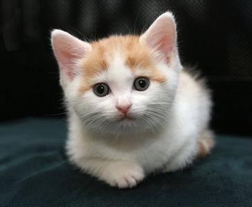 这些萌萌的小动物你想要哪个?