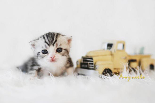 壁纸 动物 猫 猫咪 小猫 桌面 600_401