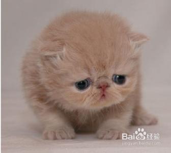 【桃子】小宠物各种时候的表情