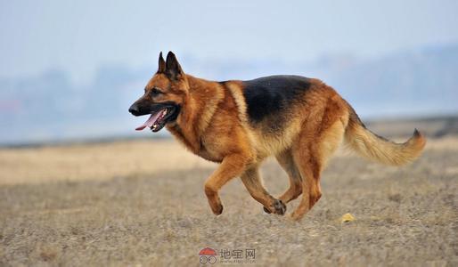 【银狼】12星座的最配狗狗